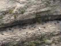 Πουλιά στο βράχο Στοκ εικόνα με δικαίωμα ελεύθερης χρήσης