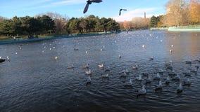 Πουλιά στο λεύκωμα λιμνών στοκ εικόνα