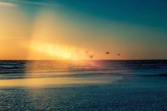 Πουλιά στο ηλιοβασίλεμα παραλιών Στοκ Φωτογραφία