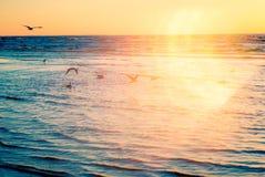 Πουλιά στο ηλιοβασίλεμα παραλιών Στοκ εικόνα με δικαίωμα ελεύθερης χρήσης