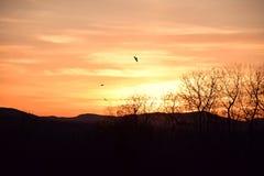 Πουλιά στο ηλιοβασίλεμα Στοκ φωτογραφίες με δικαίωμα ελεύθερης χρήσης