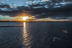 Πουλιά στο ηλιοβασίλεμα Στοκ Φωτογραφίες