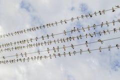 Πουλιά στο καλώδιο Στοκ φωτογραφίες με δικαίωμα ελεύθερης χρήσης