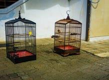 Πουλιά στο κλουβί κάνοντας ηλιοθεραπεία μπροστά από τη φωτογραφία σπιτιών που λαμβάνεται στην Τζακάρτα Ινδονησία Στοκ Φωτογραφία