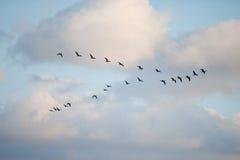 Πουλιά στο σχηματισμό Στοκ εικόνα με δικαίωμα ελεύθερης χρήσης