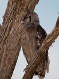 Πουλιά της Τανζανίας Στοκ φωτογραφία με δικαίωμα ελεύθερης χρήσης