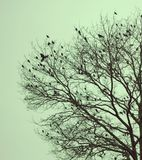 Πουλιά του χειμώνα Στοκ Φωτογραφίες