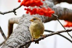 Πουλιά των στεπών Στοκ Εικόνες