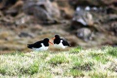 πουλιά δύο Στοκ εικόνες με δικαίωμα ελεύθερης χρήσης
