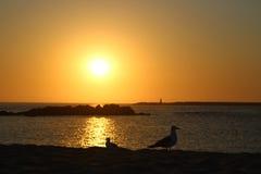 πουλιά δύο Στοκ Εικόνα