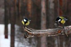 Πουλιά Στοκ Φωτογραφίες