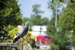 Πουλιά 113 Στοκ Φωτογραφίες