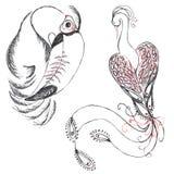 Πουλιά (Toucan και πουλί του παραδείσου) Στοκ Φωτογραφίες
