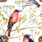 Πουλιά Watercolor στα ανθίζοντας δέντρα Στοκ Εικόνες