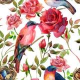 Πουλιά Watercolor στα ρόδινα και κόκκινα τριαντάφυλλα Στοκ φωτογραφία με δικαίωμα ελεύθερης χρήσης