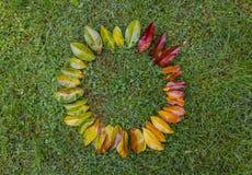 Που χρωματίζεται η κλίση βγάζει φύλλα Στοκ φωτογραφίες με δικαίωμα ελεύθερης χρήσης