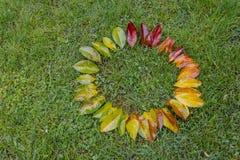 Που χρωματίζεται η κλίση βγάζει φύλλα Στοκ Εικόνες