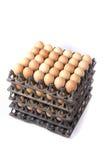 Πολλά αυγά που απομονώνονται καφετιά στο λευκό Στοκ εικόνες με δικαίωμα ελεύθερης χρήσης