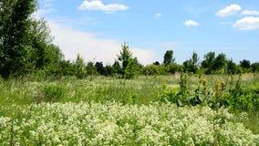 Πολλά γρήγορα πουλιά πετούν το καλοκαίρι πέρα από ένα πράσινο λιβάδι με τα λουλούδια απόθεμα βίντεο