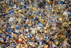Πολλά κοχύλια θάλασσας στην αμμώδη σύσταση παραλιών Στοκ Φωτογραφίες