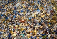 Πολλά κοχύλια θάλασσας στην αμμώδη σύσταση παραλιών Στοκ εικόνα με δικαίωμα ελεύθερης χρήσης