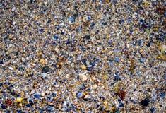 Πολλά κοχύλια θάλασσας στην αμμώδη σύσταση παραλιών Στοκ φωτογραφίες με δικαίωμα ελεύθερης χρήσης