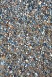 Πολλά κοχύλια στην παραλία άμμου Στοκ Εικόνες