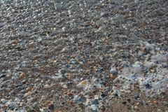 Πολλά κοχύλια στην παραλία άμμου Στοκ εικόνα με δικαίωμα ελεύθερης χρήσης