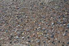 Πολλά κοχύλια στην παραλία άμμου Στοκ Εικόνα