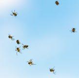 Πολλά μικρά spiderlings πετούν πέρα από τον ουρανό Νέες αράχνες Στοκ Φωτογραφία