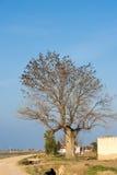 Πολλά πουλιά στο δέντρο μόνο δέντρο πεδίων μπλε ουρανός ανασκόπησης διάστημα αντιγράφων Στοκ εικόνες με δικαίωμα ελεύθερης χρήσης