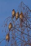 Πολλά πουλιά στο δέντρο Στοκ Φωτογραφίες