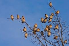 Πολλά πουλιά στο δέντρο Στοκ εικόνες με δικαίωμα ελεύθερης χρήσης