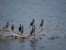 Πολλά πουλιά Στοκ Φωτογραφίες