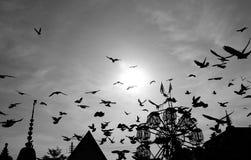 Πολλά πουλιά Στοκ φωτογραφία με δικαίωμα ελεύθερης χρήσης