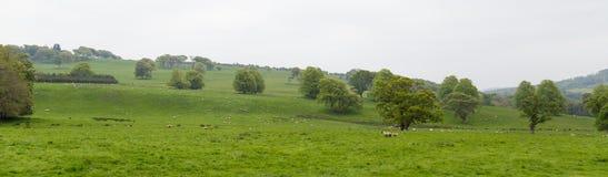 Πολλά πρόβατα σε ένα πράσινο λιβάδι στην Ιρλανδία Στοκ εικόνα με δικαίωμα ελεύθερης χρήσης
