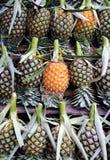 Πολλά φρέσκα φρούτα ανανά Στοκ Φωτογραφίες