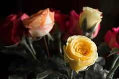 Πολλά χρώματα των τριαντάφυλλων στοκ φωτογραφίες