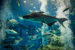 Πολλά ψάρια παρουσιάζουν στο μεγάλο ενυδρείο Στοκ φωτογραφία με δικαίωμα ελεύθερης χρήσης