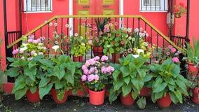 Πολλά όμορφα λουλούδια μπροστά από την πόρτα Στοκ φωτογραφία με δικαίωμα ελεύθερης χρήσης