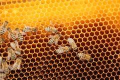 Πολλές μέλισσες μελιού Στοκ φωτογραφίες με δικαίωμα ελεύθερης χρήσης