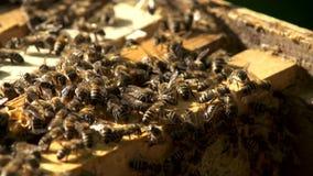 Πολλές μέλισσες που εργάζονται στις κηρήθρες με το μέλι σε αργή κίνηση απόθεμα βίντεο