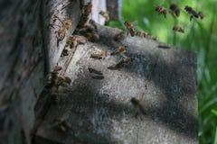 Πολλές μέλισσες που πετούν σε beevive στοκ εικόνα