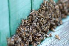 Πολλές μέλισσες στην κυψέλη στοκ εικόνες με δικαίωμα ελεύθερης χρήσης