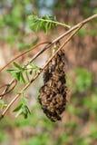 Πολλές μέλισσες στον κλάδο στοκ φωτογραφία