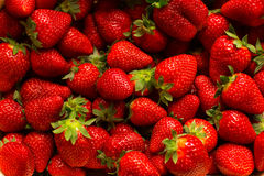 πολλές φράουλες Στοκ Εικόνες