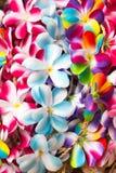 Πολλές όμορφες γιρλάντες λουλουδιών στο ταϊλανδικό ύφος Στοκ φωτογραφία με δικαίωμα ελεύθερης χρήσης