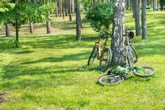 Ποδήλατα που βρίσκονται κοντά στο δέντρο Στοκ φωτογραφία με δικαίωμα ελεύθερης χρήσης