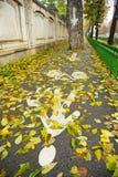 Ποδήλατο και για τους πεζούς πάροδος το φθινόπωρο στοκ εικόνες