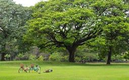 Ποδήλατο στον κήπο πάρκων πράσινο Στοκ φωτογραφία με δικαίωμα ελεύθερης χρήσης